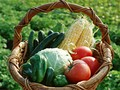 大田市場に拠点を置く、野菜・果物仲卸会社の写真