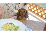浜名湖畔のリゾートホテル内「ドッグカフェ」愛犬同伴のカフェ&レストランの写真2