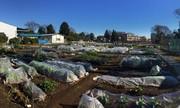 マイファーム京田辺農園のアルバイト情報