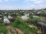 全国80箇所の耕作放棄地を再生、農園として展開中!