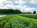 アグリイノベーション大学校 千葉農場のアルバイト