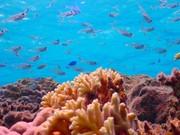 異例な海の中
