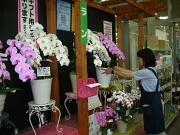 島忠 横浜店ホームセンターフロアのアルバイト情報