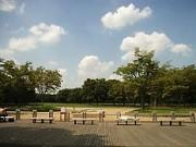 弊社から歩いてすぐの代々木公園