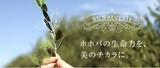 株式会社サンナチュラルズ 東京のアルバイト