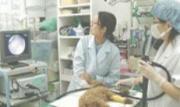 金町アニマルクリニック(獣医師)のアルバイト情報