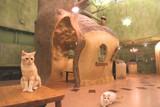 Cat Cafe てまりのおうちのアルバイト
