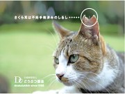 ノラ猫の不妊去勢をする団体を支援